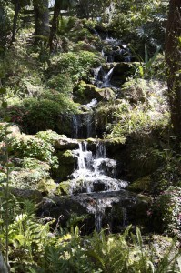 waterfall at Rainbow Springs State Park. Photo by Lucy Beebe Tobias