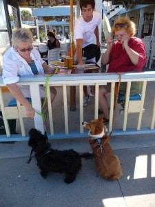 Dog friendly beaches - Golden Lion Cafe, Flagler Beach