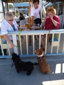 Dog friendly beaches - Golden Lion Cafe, Flagler Beach