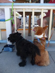Dog friendly beaches - lunch place at Flagler Beach