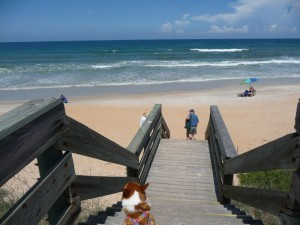 Dog friendly baches - walk over to beach