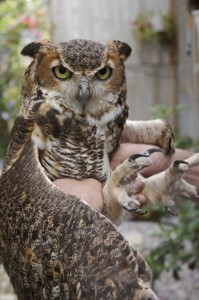 bird sanctuaries - Owls-Ocala