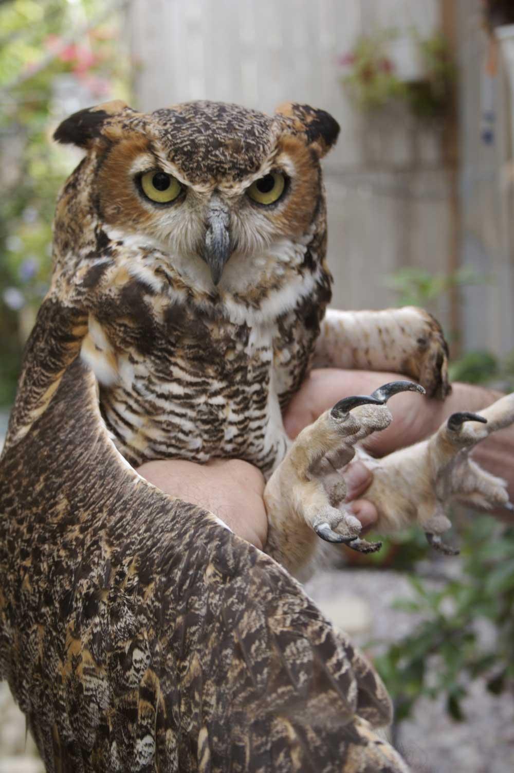 Bird Sanctuaries Fill a Need in Florida