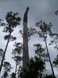 florida forest