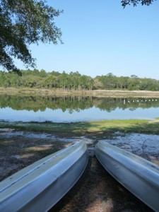florida forest - horseshoe lake