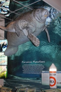 manatee exhibit at Ding Darling
