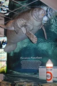 manatee exhibit at Ding Darling