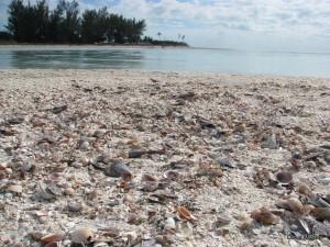 Florida beaches - seashells