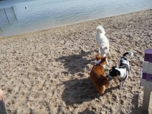Florida beaches - dog beach
