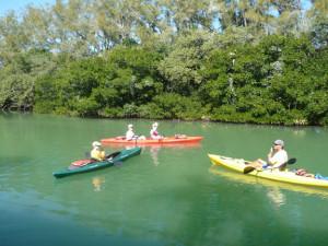 water tours - kayaking in Sarasota Bay