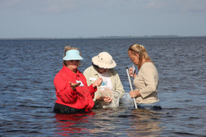 sea grass exploration, Punta Gorda Nature Center