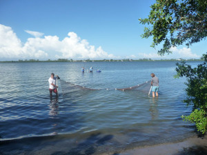 dragging a net through sea grass at Lemon Bay Park