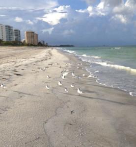 Volunteer in Florida - walk the beach with Mote's Turtle Patrol.