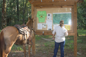 Horseback ridig - reading horse trail maps at Silver Springs State Park, Ocala