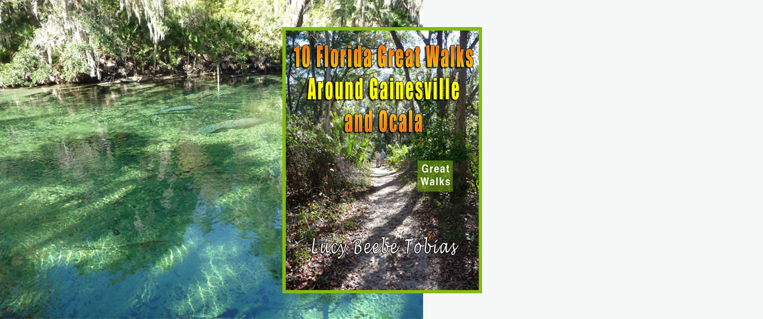 10 Florida Great Walks Around Gainesville and Ocala