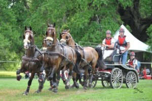 Ocala horse drawn carriage & grandchildren