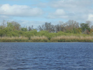 Myakka wildlife airboat tour