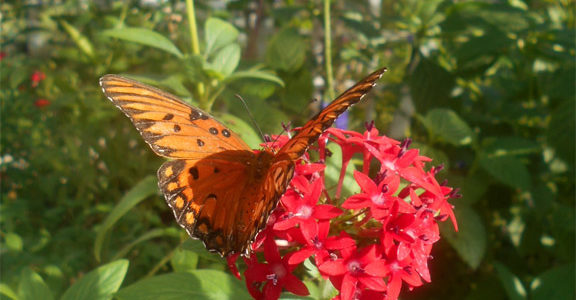 Flutter with the Butterflies in Fort Myers