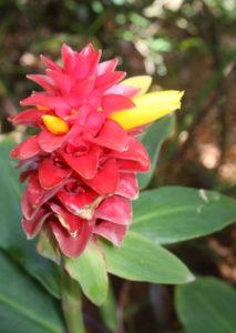 Sunken Gardens flower