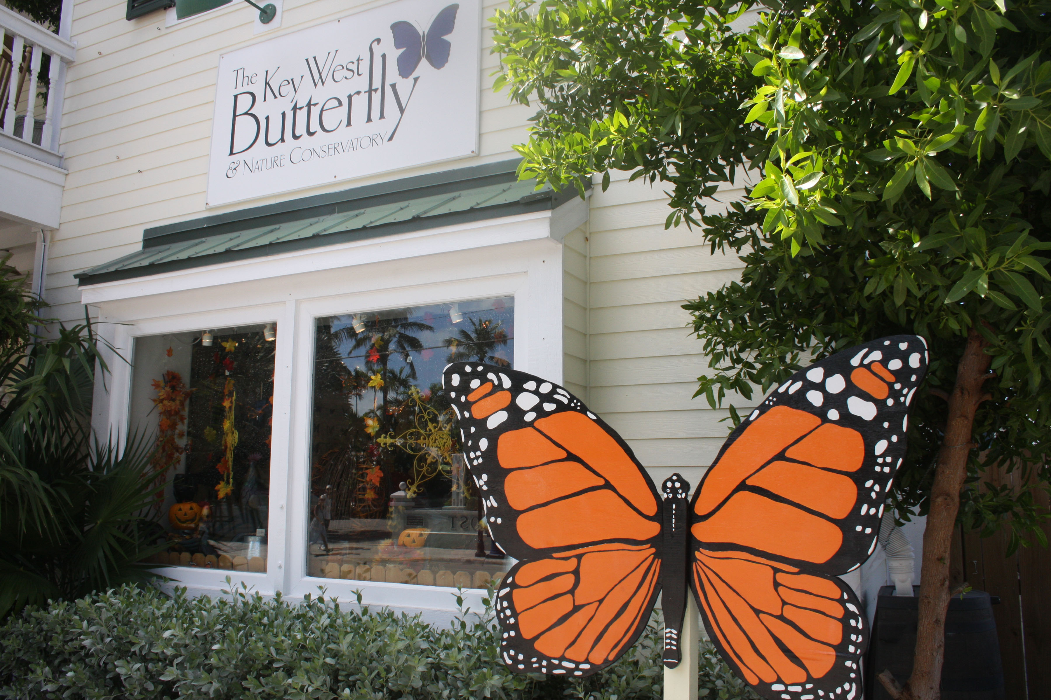 Key West Butterfly And Nature Conservatory Beckons Lucy Tobias